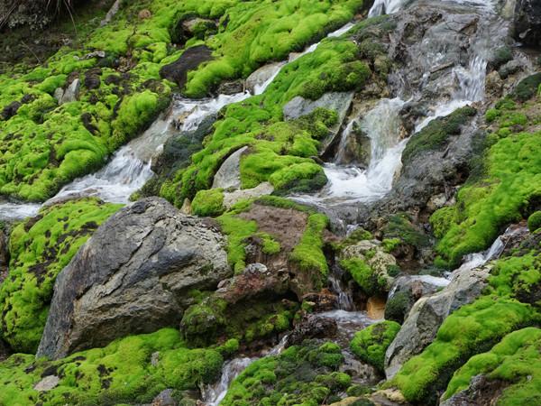 群馬の大自然 チャツボミゴケ公園