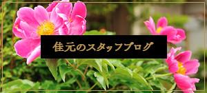 佳元のスタッフブログ