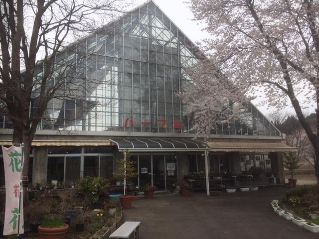 ハーブ館と桜