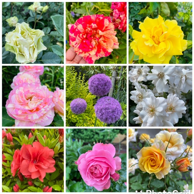 varieties of flowers