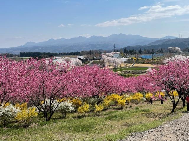 中之条ガーデンズ 春の景色